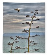 Catalina Gull And Channel Fleece Blanket