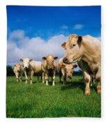 Cattle, Charolais Fleece Blanket