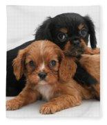 Cavalier King Charles Spaniel Puppies Fleece Blanket