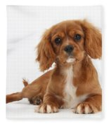 Cavalier King Charles Spaniel Puppy Fleece Blanket