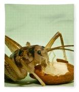 Cave Cricket Feeding On Almond 8 Fleece Blanket