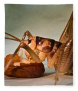 Cave Cricket Feeding On Almond Fleece Blanket