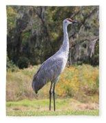 Central Florida Sandhill Crane With Oaks Fleece Blanket