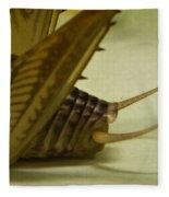 Cerci Of Cave Cricket Fleece Blanket