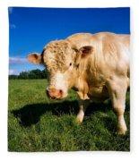 Charolais Bull, Ireland Fleece Blanket