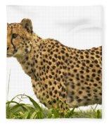Cheetah Hunting Fleece Blanket