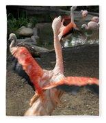 Chilean Flamingo Fleece Blanket