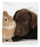 Chocolate Labrador Pup Fleece Blanket