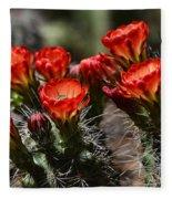 Claret Cup Cactus  Fleece Blanket
