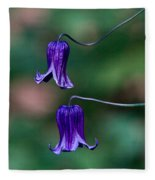Clematis Integrifolia Rooguchi 3 Fleece Blanket