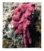 Close-up Of Live Sponge Fleece Blanket