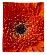 Close Up Orange Mum Fleece Blanket