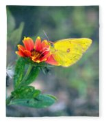 Clouded Sulphur Butterfly Square Fleece Blanket