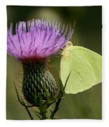 Cloudless Sulfur Butterfly On Bull Thistle Wildflower Fleece Blanket
