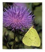 Cloudless Sulphur Butterfly Din159 Fleece Blanket