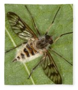 Cluster Fly Killed By Parasitic Fungus Fleece Blanket