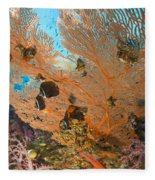 Collare Butterflyfish Fleece Blanket
