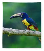 Collared Aracari Fleece Blanket