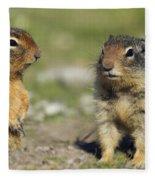 Columbian Ground Squirrels, Banff Fleece Blanket