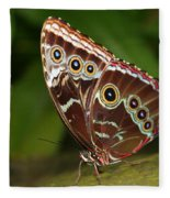 Common Blue Morpho Fleece Blanket