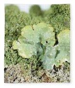 Common Greenshield Lichen Fleece Blanket