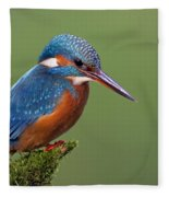 Common Kingfisher Alcedo Atthis Fleece Blanket
