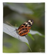 Common Tiger Glassywing Fleece Blanket