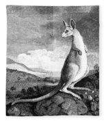 Cook: Kangaroo, 1773 Fleece Blanket