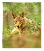 Coyote Caught Napping Fleece Blanket