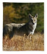 Coyote On A Fall Meadow Fleece Blanket