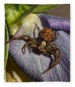 Crab Spider In A Violet Fleece Blanket