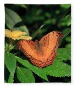 Cruiser Butterfly Fleece Blanket