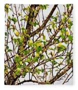 Cucumber Tree Blossoms Fleece Blanket