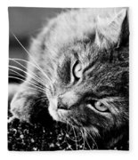 Cuddly Cat Fleece Blanket