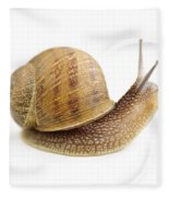 Curious Snail Fleece Blanket
