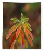 Cushion Spurge Fleece Blanket