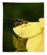 Cynipoidea Fleece Blanket