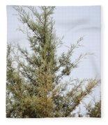 Cypress Fleece Blanket