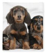 Dachshund And Merle Dachshund Pups Fleece Blanket