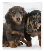 Dachshund Puppies Fleece Blanket