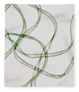 Dacron Fibers Fleece Blanket
