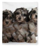 Daxiedoodle Poodle X Dachshund Puppies Fleece Blanket