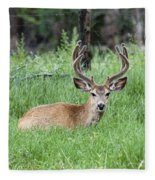 Deer At Rest Fleece Blanket