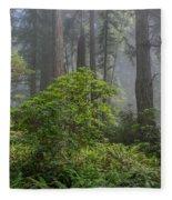 Del Norte Redwoods Fleece Blanket
