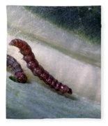 Diamondback Moth Larvae Fleece Blanket