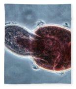 Didinium Nasutum, Ingesting  Paramecium Fleece Blanket