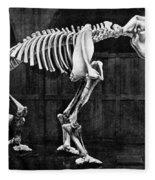 Diprotodon, Cenozoic Mammal Fleece Blanket
