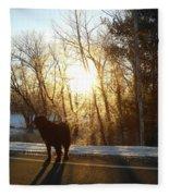 Dog In Morning Sun Fleece Blanket