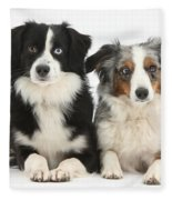 Dogs With Different-colored Eyes Fleece Blanket