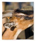 Domestic Goat Fleece Blanket
